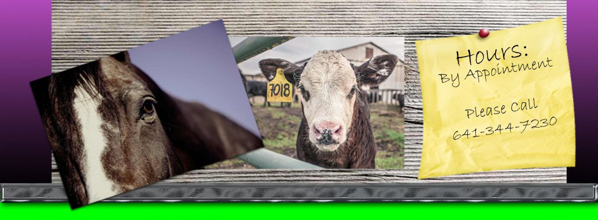 Quail Run Veterinary Services Blog